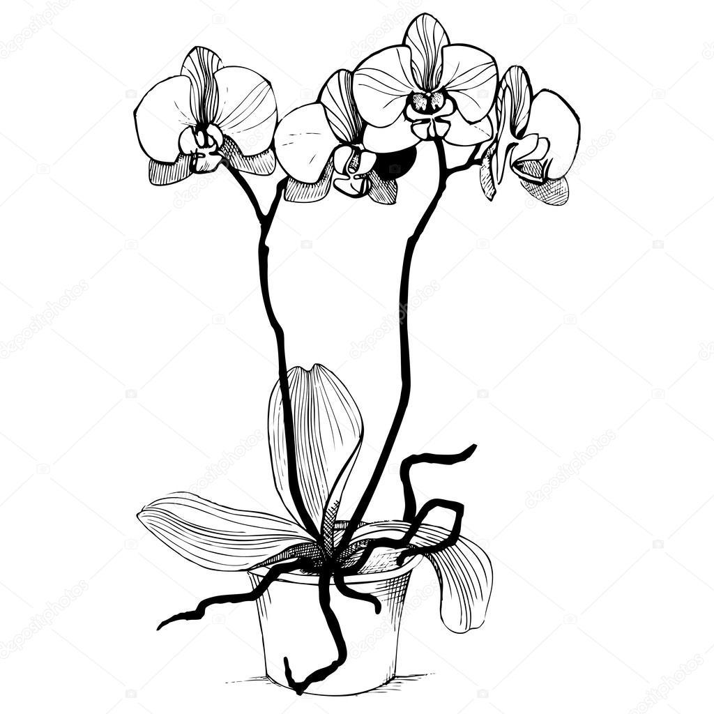 Orkide Çiçekleri